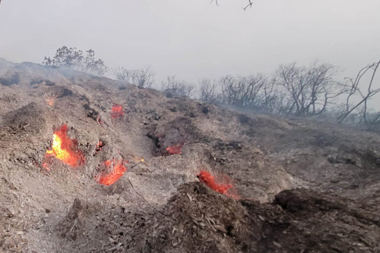 The roots of catalpa trees seen burning in the Har Tayyasim Nature Reserve outside of Jerusalem. (Photo: Gilad Weil / Israel Nature and Parks Authority)