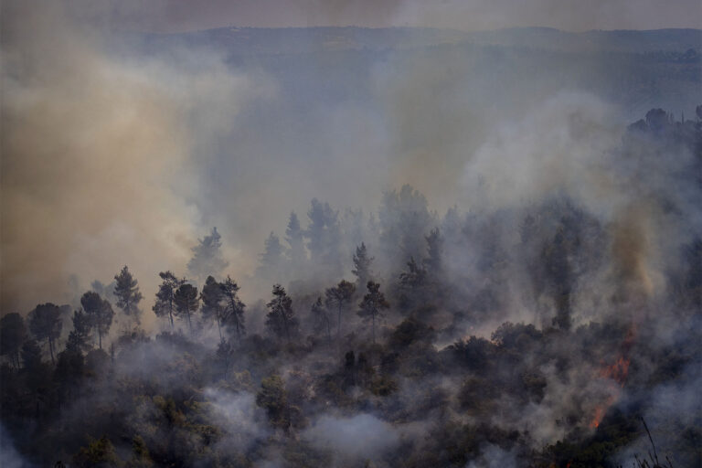Burned down trees in a forest near Beit Meir, outside of Jerusalem. (Photo: Olivier Fitoussi / Flash90)